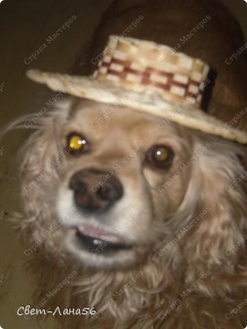 """Этого """"джентльмена """" в соломенной шляпе зовут Кузьма . Как он вам ?! фото 1"""