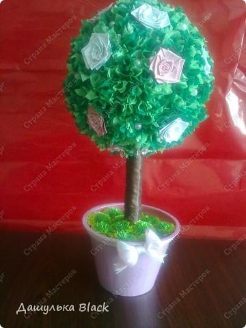 Вот такое деревце вырастила в подарок подружке на 8 марта... =) фото 2