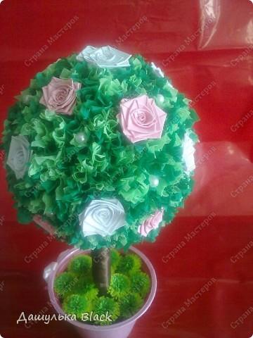 Вот такое деревце вырастила в подарок подружке на 8 марта... =) фото 3