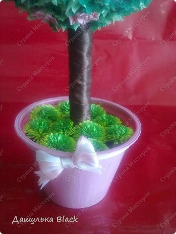 Вот такое деревце вырастила в подарок подружке на 8 марта... =) фото 4