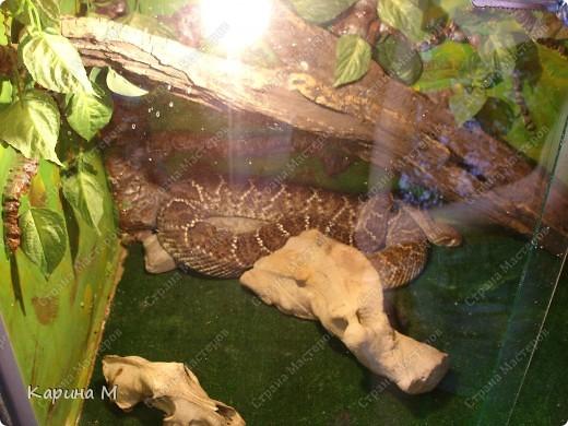 Игуана фото 16