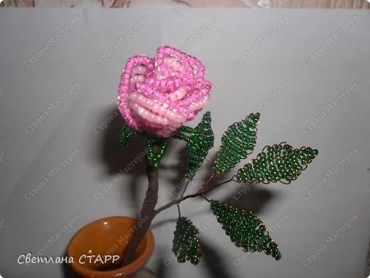 Сделала ещё одну розу!