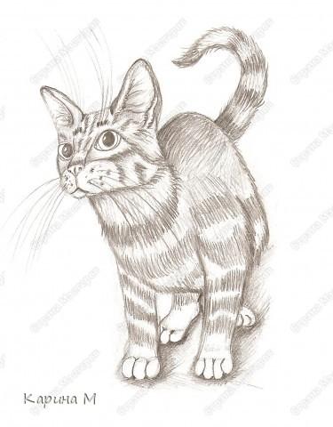 Котик срисовывался с журнала, на работе)))) Простой карандаш, офисная бумага. фото 3