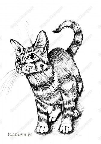 Котик срисовывался с журнала, на работе)))) Простой карандаш, офисная бумага. фото 2