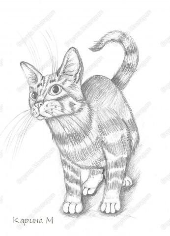 Котик срисовывался с журнала, на работе)))) Простой карандаш, офисная бумага. фото 1