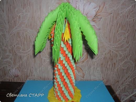 Вот моя пальма. фото 1