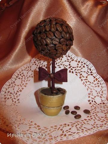 В Стране Мастеров сейчас несчетное количество очаровательных кофейных деревьев! Дочка тоже захотела вырастить кофейное дерево (для мамочки). Я идею, конечно, поддержала - уж очень люблю запах кофе!!! фото 1