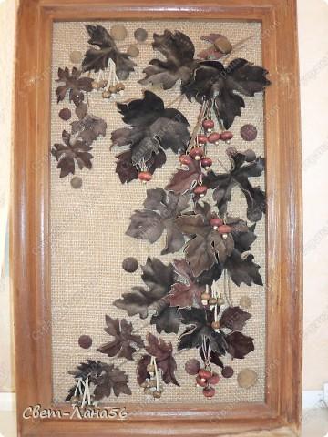 Виноград. фото 1