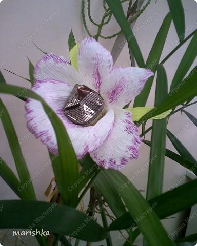 Нарцисс фото 7