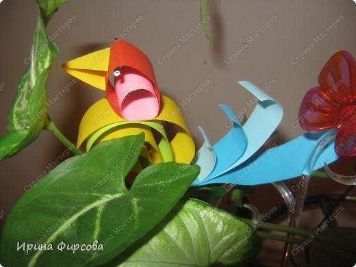 Радужная птичка. фото 1