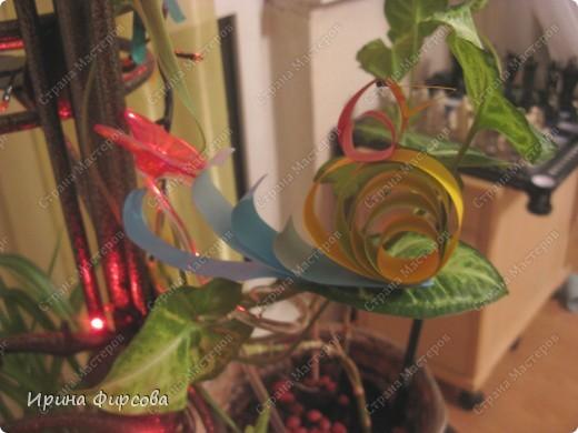 Радужная птичка. фото 3