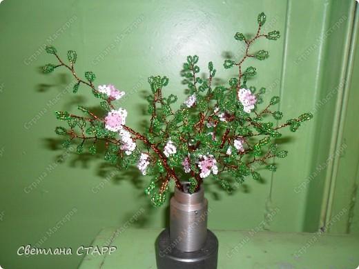 веточки цветущей яблони. фото 1