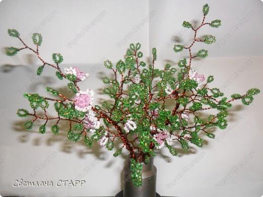 веточки цветущей яблони. фото 2