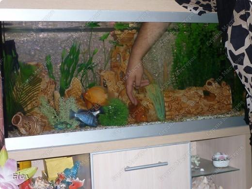 Мой аквариум 180 литров,хочется больше,но технической возможности нет,пол не видержит фото 6