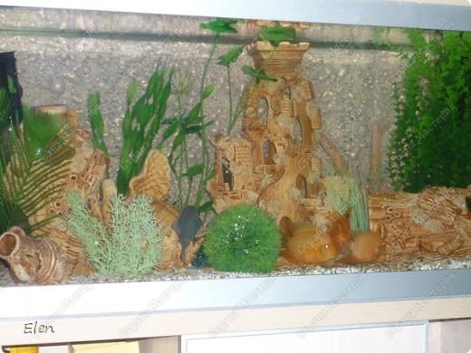 Мой аквариум 180 литров,хочется больше,но технической возможности нет,пол не видержит фото 1