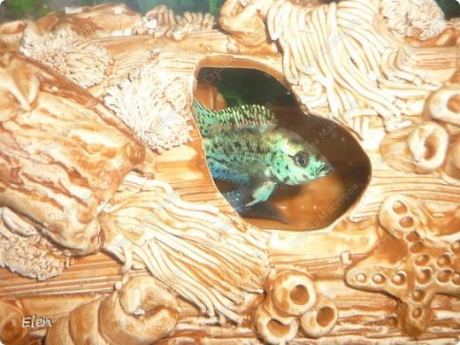 Мой аквариум 180 литров,хочется больше,но технической возможности нет,пол не видержит фото 3