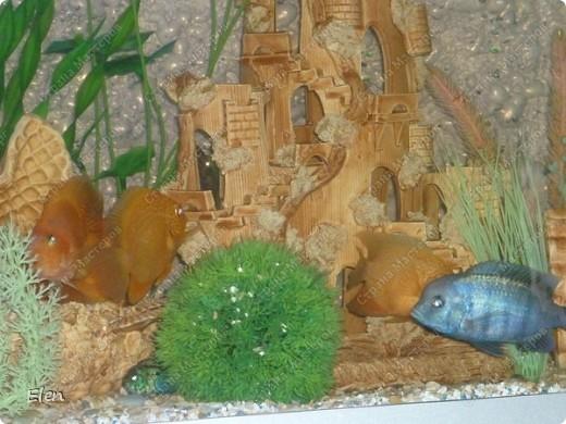 Мой аквариум 180 литров,хочется больше,но технической возможности нет,пол не видержит фото 5