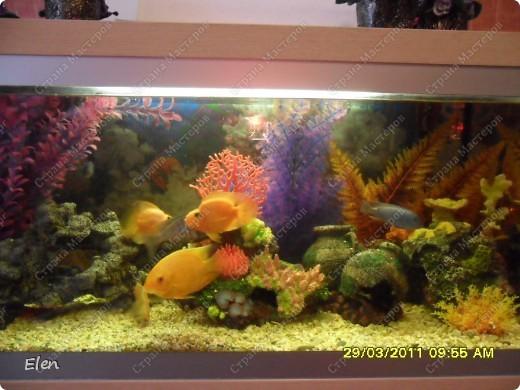 Мой аквариум 180 литров,хочется больше,но технической возможности нет,пол не видержит фото 7