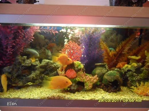 Мой аквариум 180 литров,хочется больше,но технической возможности нет,пол не видержит фото 2