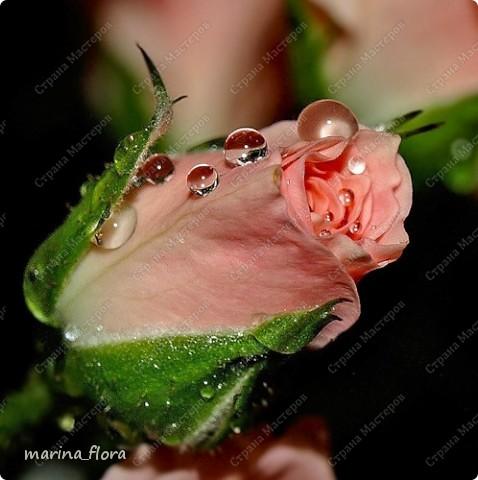 Цветы всегда были символом красоты и  гармонии, олицетворением стремления человека к прекрасному. Дарить цветы – значит выражать свою любовь, почтение, расположение или уважение. фото 30