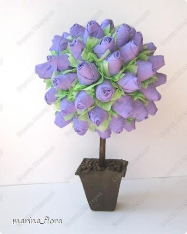 Факт тот, что в живой природе  ни синих, ни голубых роз не существует.  Дело в том, что  в них отсутствует ген синего пигмента - дельфинидин, который мог бы дать розам синий (голубой) цвет.  В 2009 году прошла новость, что японская корпорация Сантори объявила, что на прилавки поступят первые в мире  синие розы.  На Шоу цветов в Токио гендиректор отметил, что данная роза – генетически-модифицированный продукт, полученный путем имплантации необходимого гена  от анютиных глазок. Назвали новые розы -  «Аплодисменты», в знак поздравления и поощрения тех, кто добился своей мечты.  «Ну вот, наконец-то!» - подумала я.  фото 4