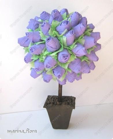 Факт тот, что в живой природе  ни синих, ни голубых роз не существует.  Дело в том, что  в них отсутствует ген синего пигмента - дельфинидин, который мог бы дать розам синий (голубой) цвет.  В 2009 году прошла новость, что японская корпорация Сантори объявила, что на прилавки поступят первые в мире  синие розы.  На Шоу цветов в Токио гендиректор отметил, что данная роза – генетически-модифицированный продукт, полученный путем имплантации необходимого гена  от анютиных глазок. Назвали новые розы -  «Аплодисменты», в знак поздравления и поощрения тех, кто добился своей мечты.  «Ну вот, наконец-то!» - подумала я.  фото 1
