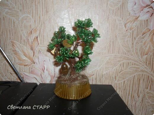 давно хотела бонсай и денежное дерево для себя(всем друзьям уже сделала!) фото 1
