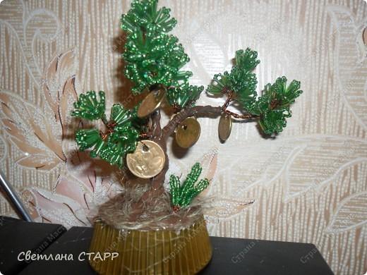 давно хотела бонсай и денежное дерево для себя(всем друзьям уже сделала!) фото 2