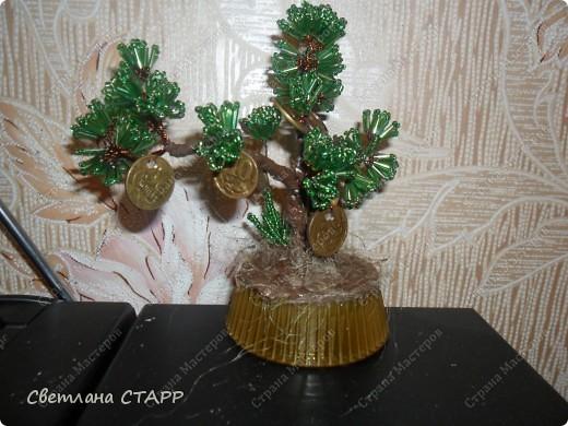 давно хотела бонсай и денежное дерево для себя(всем друзьям уже сделала!) фото 3