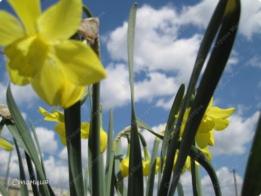 Да, весна пожалуй, не слишком торопится к нам. каждый день дожди и град. Я так соскучилась по цветам. В этом году обустраиваем двор и перепланируем клумбу, так что мои садовые жители скоро разойдутся по новым местам. А пока любуюсь фотографиями прошлых лет:) И с вами хочу поделиться этой красотой. фото 8