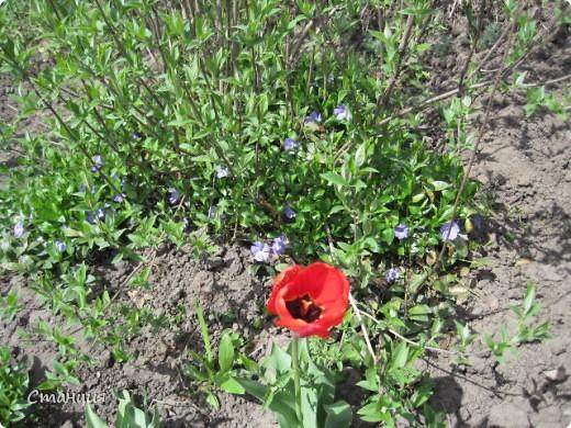 Да, весна пожалуй, не слишком торопится к нам. каждый день дожди и град. Я так соскучилась по цветам. В этом году обустраиваем двор и перепланируем клумбу, так что мои садовые жители скоро разойдутся по новым местам. А пока любуюсь фотографиями прошлых лет:) И с вами хочу поделиться этой красотой. фото 9