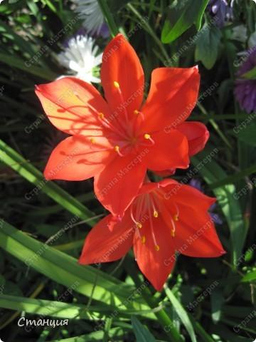 Да, весна пожалуй, не слишком торопится к нам. каждый день дожди и град. Я так соскучилась по цветам. В этом году обустраиваем двор и перепланируем клумбу, так что мои садовые жители скоро разойдутся по новым местам. А пока любуюсь фотографиями прошлых лет:) И с вами хочу поделиться этой красотой. фото 20
