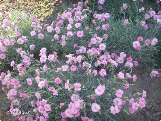 Да, весна пожалуй, не слишком торопится к нам. каждый день дожди и град. Я так соскучилась по цветам. В этом году обустраиваем двор и перепланируем клумбу, так что мои садовые жители скоро разойдутся по новым местам. А пока любуюсь фотографиями прошлых лет:) И с вами хочу поделиться этой красотой. фото 17