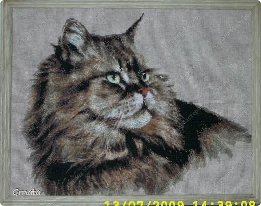 """Здравствуйте всем, кто пришел меня навестить.  Знакомьтесь - кот Маркиз. Вышивался шесть лет назад примерно два года с перерывами. С него - то и началось увлечение вышивкой, схемка из коллекции """"Вышитые картины"""", купила случайно, просто напомнила кота из детства. Захотелось вышить, нитки к схеме подбирала на глазок (нитки - Кирова) , ключ был по-моему, под ДМС. фото 1"""