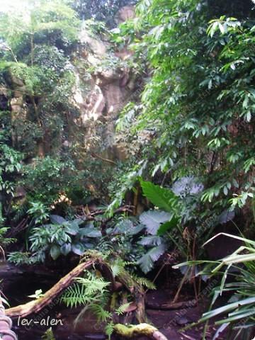 Воодушевившись фотопутешествиями Олесандры и фоторепортажем из московского зоопарка Hani , решила пригласить вас в виртуальное путешествие по парку Дворца Шёнбрунн  ( венской резиденции австрийских императоров ) и расположенному там зоопарку. Построенный в 1752 году в качестве императорского зверинца, он является старейшим зоопарком в мире. В то время зоопарк был доступен только членам императорской семьи. Император Иосиф II особенно любил это место, и сделал немало для развития парка. Он много путешествовал по Африке и Америке, привозя из каждой поездки животных для пополнения коллекции. При нем же, в 1779г., зоопарк открыли для публики, причем бесплатно.  фото 37