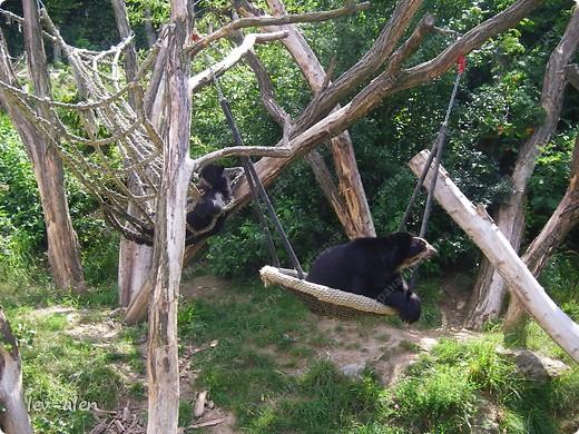 Воодушевившись фотопутешествиями Олесандры и фоторепортажем из московского зоопарка Hani , решила пригласить вас в виртуальное путешествие по парку Дворца Шёнбрунн  ( венской резиденции австрийских императоров ) и расположенному там зоопарку. Построенный в 1752 году в качестве императорского зверинца, он является старейшим зоопарком в мире. В то время зоопарк был доступен только членам императорской семьи. Император Иосиф II особенно любил это место, и сделал немало для развития парка. Он много путешествовал по Африке и Америке, привозя из каждой поездки животных для пополнения коллекции. При нем же, в 1779г., зоопарк открыли для публики, причем бесплатно.  фото 42