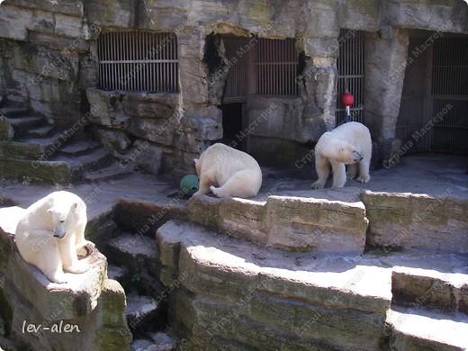 Воодушевившись фотопутешествиями Олесандры и фоторепортажем из московского зоопарка Hani , решила пригласить вас в виртуальное путешествие по парку Дворца Шёнбрунн  ( венской резиденции австрийских императоров ) и расположенному там зоопарку. Построенный в 1752 году в качестве императорского зверинца, он является старейшим зоопарком в мире. В то время зоопарк был доступен только членам императорской семьи. Император Иосиф II особенно любил это место, и сделал немало для развития парка. Он много путешествовал по Африке и Америке, привозя из каждой поездки животных для пополнения коллекции. При нем же, в 1779г., зоопарк открыли для публики, причем бесплатно.  фото 51