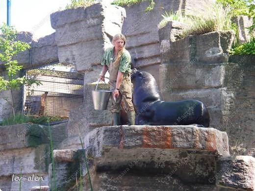 Воодушевившись фотопутешествиями Олесандры и фоторепортажем из московского зоопарка Hani , решила пригласить вас в виртуальное путешествие по парку Дворца Шёнбрунн  ( венской резиденции австрийских императоров ) и расположенному там зоопарку. Построенный в 1752 году в качестве императорского зверинца, он является старейшим зоопарком в мире. В то время зоопарк был доступен только членам императорской семьи. Император Иосиф II особенно любил это место, и сделал немало для развития парка. Он много путешествовал по Африке и Америке, привозя из каждой поездки животных для пополнения коллекции. При нем же, в 1779г., зоопарк открыли для публики, причем бесплатно.  фото 63