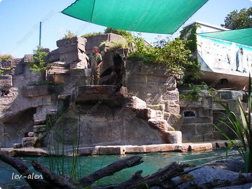 Воодушевившись фотопутешествиями Олесандры и фоторепортажем из московского зоопарка Hani , решила пригласить вас в виртуальное путешествие по парку Дворца Шёнбрунн  ( венской резиденции австрийских императоров ) и расположенному там зоопарку. Построенный в 1752 году в качестве императорского зверинца, он является старейшим зоопарком в мире. В то время зоопарк был доступен только членам императорской семьи. Император Иосиф II особенно любил это место, и сделал немало для развития парка. Он много путешествовал по Африке и Америке, привозя из каждой поездки животных для пополнения коллекции. При нем же, в 1779г., зоопарк открыли для публики, причем бесплатно.  фото 65