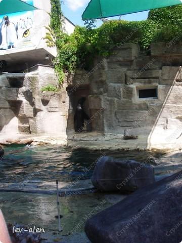 Воодушевившись фотопутешествиями Олесандры и фоторепортажем из московского зоопарка Hani , решила пригласить вас в виртуальное путешествие по парку Дворца Шёнбрунн  ( венской резиденции австрийских императоров ) и расположенному там зоопарку. Построенный в 1752 году в качестве императорского зверинца, он является старейшим зоопарком в мире. В то время зоопарк был доступен только членам императорской семьи. Император Иосиф II особенно любил это место, и сделал немало для развития парка. Он много путешествовал по Африке и Америке, привозя из каждой поездки животных для пополнения коллекции. При нем же, в 1779г., зоопарк открыли для публики, причем бесплатно.  фото 66