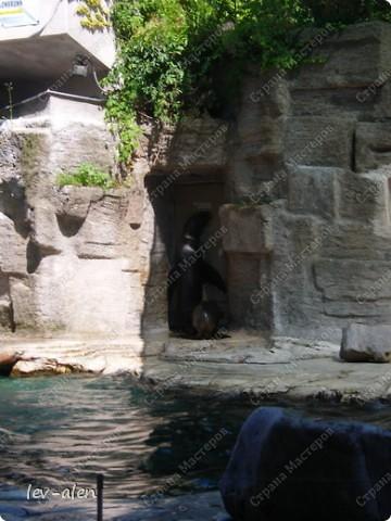Воодушевившись фотопутешествиями Олесандры и фоторепортажем из московского зоопарка Hani , решила пригласить вас в виртуальное путешествие по парку Дворца Шёнбрунн  ( венской резиденции австрийских императоров ) и расположенному там зоопарку. Построенный в 1752 году в качестве императорского зверинца, он является старейшим зоопарком в мире. В то время зоопарк был доступен только членам императорской семьи. Император Иосиф II особенно любил это место, и сделал немало для развития парка. Он много путешествовал по Африке и Америке, привозя из каждой поездки животных для пополнения коллекции. При нем же, в 1779г., зоопарк открыли для публики, причем бесплатно.  фото 67