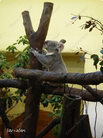 Воодушевившись фотопутешествиями Олесандры и фоторепортажем из московского зоопарка Hani , решила пригласить вас в виртуальное путешествие по парку Дворца Шёнбрунн  ( венской резиденции австрийских императоров ) и расположенному там зоопарку. Построенный в 1752 году в качестве императорского зверинца, он является старейшим зоопарком в мире. В то время зоопарк был доступен только членам императорской семьи. Император Иосиф II особенно любил это место, и сделал немало для развития парка. Он много путешествовал по Африке и Америке, привозя из каждой поездки животных для пополнения коллекции. При нем же, в 1779г., зоопарк открыли для публики, причем бесплатно.  фото 70