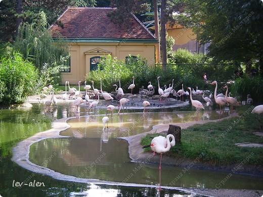 Воодушевившись фотопутешествиями Олесандры и фоторепортажем из московского зоопарка Hani , решила пригласить вас в виртуальное путешествие по парку Дворца Шёнбрунн  ( венской резиденции австрийских императоров ) и расположенному там зоопарку. Построенный в 1752 году в качестве императорского зверинца, он является старейшим зоопарком в мире. В то время зоопарк был доступен только членам императорской семьи. Император Иосиф II особенно любил это место, и сделал немало для развития парка. Он много путешествовал по Африке и Америке, привозя из каждой поездки животных для пополнения коллекции. При нем же, в 1779г., зоопарк открыли для публики, причем бесплатно.  фото 72