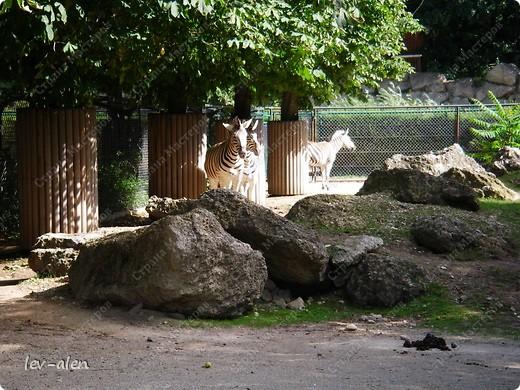 Воодушевившись фотопутешествиями Олесандры и фоторепортажем из московского зоопарка Hani , решила пригласить вас в виртуальное путешествие по парку Дворца Шёнбрунн  ( венской резиденции австрийских императоров ) и расположенному там зоопарку. Построенный в 1752 году в качестве императорского зверинца, он является старейшим зоопарком в мире. В то время зоопарк был доступен только членам императорской семьи. Император Иосиф II особенно любил это место, и сделал немало для развития парка. Он много путешествовал по Африке и Америке, привозя из каждой поездки животных для пополнения коллекции. При нем же, в 1779г., зоопарк открыли для публики, причем бесплатно.  фото 74