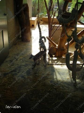 Воодушевившись фотопутешествиями Олесандры и фоторепортажем из московского зоопарка Hani , решила пригласить вас в виртуальное путешествие по парку Дворца Шёнбрунн  ( венской резиденции австрийских императоров ) и расположенному там зоопарку. Построенный в 1752 году в качестве императорского зверинца, он является старейшим зоопарком в мире. В то время зоопарк был доступен только членам императорской семьи. Император Иосиф II особенно любил это место, и сделал немало для развития парка. Он много путешествовал по Африке и Америке, привозя из каждой поездки животных для пополнения коллекции. При нем же, в 1779г., зоопарк открыли для публики, причем бесплатно.  фото 84
