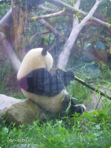 Воодушевившись фотопутешествиями Олесандры и фоторепортажем из московского зоопарка Hani , решила пригласить вас в виртуальное путешествие по парку Дворца Шёнбрунн  ( венской резиденции австрийских императоров ) и расположенному там зоопарку. Построенный в 1752 году в качестве императорского зверинца, он является старейшим зоопарком в мире. В то время зоопарк был доступен только членам императорской семьи. Император Иосиф II особенно любил это место, и сделал немало для развития парка. Он много путешествовал по Африке и Америке, привозя из каждой поездки животных для пополнения коллекции. При нем же, в 1779г., зоопарк открыли для публики, причем бесплатно.  фото 99