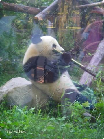 Воодушевившись фотопутешествиями Олесандры и фоторепортажем из московского зоопарка Hani , решила пригласить вас в виртуальное путешествие по парку Дворца Шёнбрунн  ( венской резиденции австрийских императоров ) и расположенному там зоопарку. Построенный в 1752 году в качестве императорского зверинца, он является старейшим зоопарком в мире. В то время зоопарк был доступен только членам императорской семьи. Император Иосиф II особенно любил это место, и сделал немало для развития парка. Он много путешествовал по Африке и Америке, привозя из каждой поездки животных для пополнения коллекции. При нем же, в 1779г., зоопарк открыли для публики, причем бесплатно.  фото 100