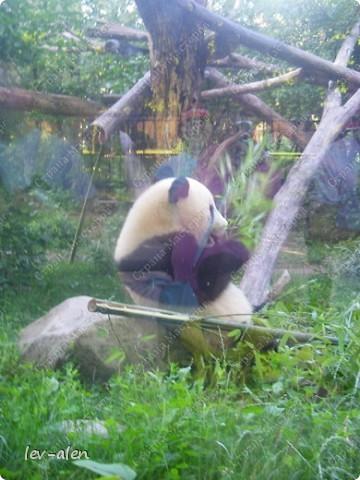 Воодушевившись фотопутешествиями Олесандры и фоторепортажем из московского зоопарка Hani , решила пригласить вас в виртуальное путешествие по парку Дворца Шёнбрунн  ( венской резиденции австрийских императоров ) и расположенному там зоопарку. Построенный в 1752 году в качестве императорского зверинца, он является старейшим зоопарком в мире. В то время зоопарк был доступен только членам императорской семьи. Император Иосиф II особенно любил это место, и сделал немало для развития парка. Он много путешествовал по Африке и Америке, привозя из каждой поездки животных для пополнения коллекции. При нем же, в 1779г., зоопарк открыли для публики, причем бесплатно.  фото 101