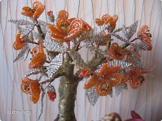 Персиковое дерево фото 2