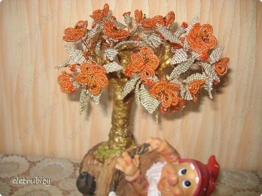 Персиковое дерево фото 1